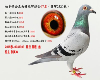 五关综合鸽王97名