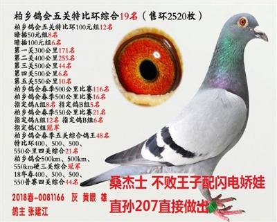 五关综合鸽王19名