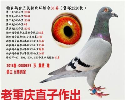 五关综合鸽王31名