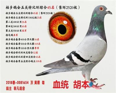 五关综合鸽王45名