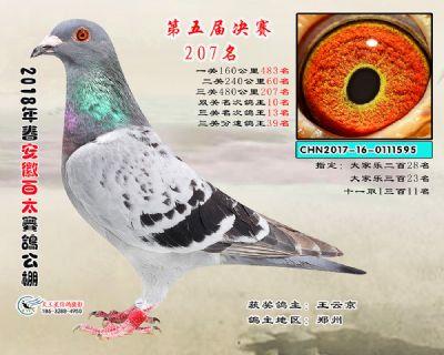 安徽百太决赛207名