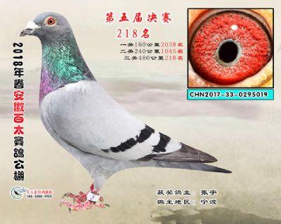 安徽百太决赛218名