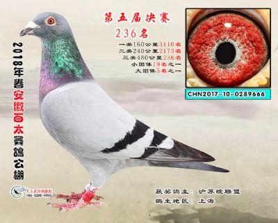 安徽百太决赛236名