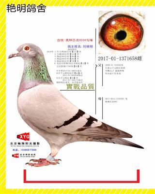 2017011371658雄 奥林匹克003X勾嘴