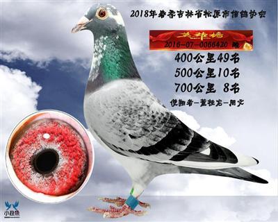 董桂龙成绩鸽