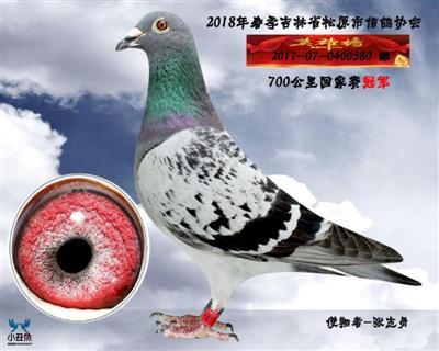 张志勇成绩鸽