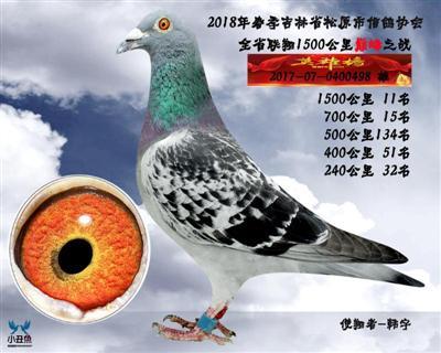 韩宇成绩鸽