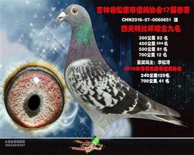 李松涛成绩鸽
