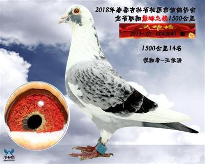 王峻涛成绩鸽