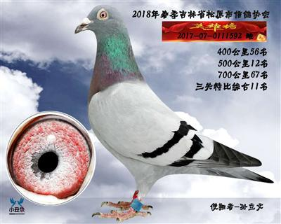 孙立文成绩鸽