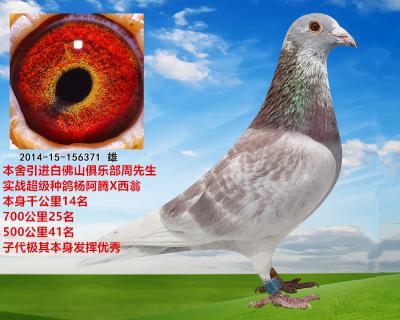 杨阿腾X西翁