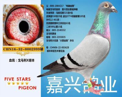 嘉兴鸽业1号拍卖鸽