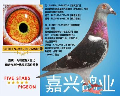 嘉兴鸽业2号拍卖鸽