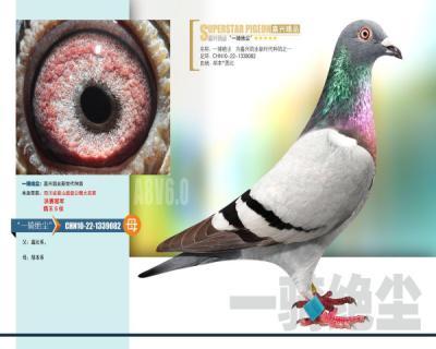 嘉兴鸽业10号拍卖鸽