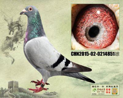 杨欧瓦克 天火俱乐部400冠军平辈