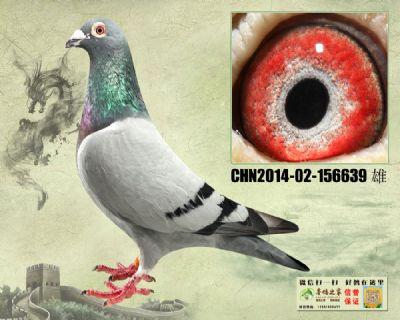 杨欧瓦克483 多重近亲回血