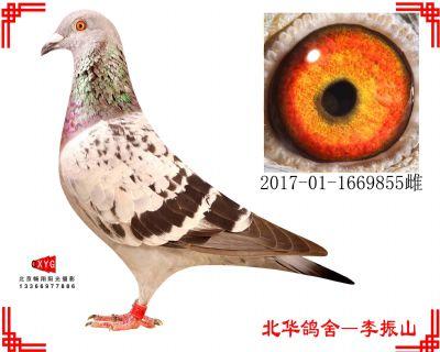 凡龙X公牛,2017011669855雌