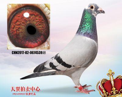 杨欧瓦克超级484双重近血