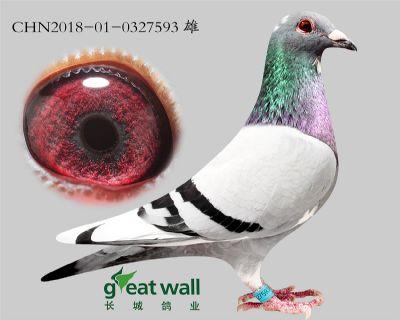 1.倚天梅尔浪血系.0327593