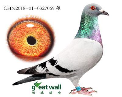 7.速霸龙x鲁道.0327069