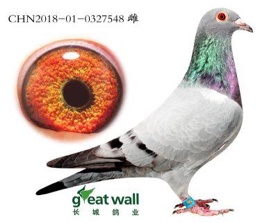 2.速霸龙x鲁道.0327548