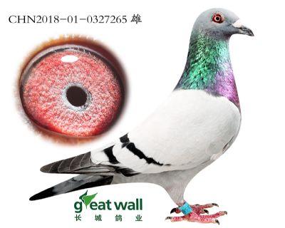 4.速霸龙血系.0327265