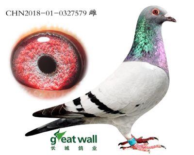 12.速霸龙血系.0327579