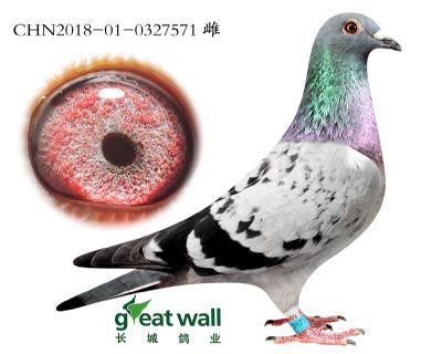 18.鲁道血系.0327571