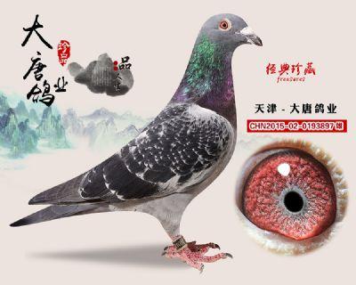 台湾帝王 冬日男孩