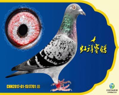 """虹祥""""特留701"""""""