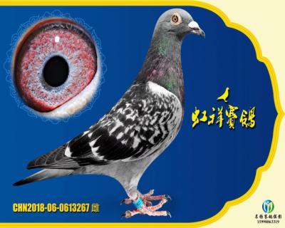"""虹祥""""特留267"""""""