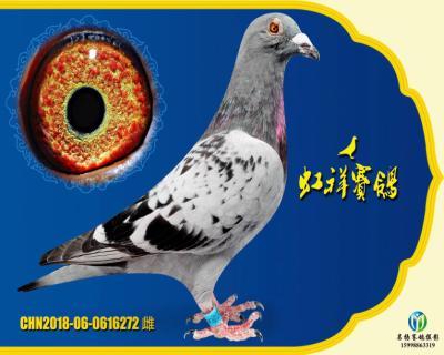 """虹祥""""特留272"""""""