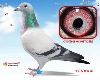 """""""虹祥""""忠盛决赛38位"""