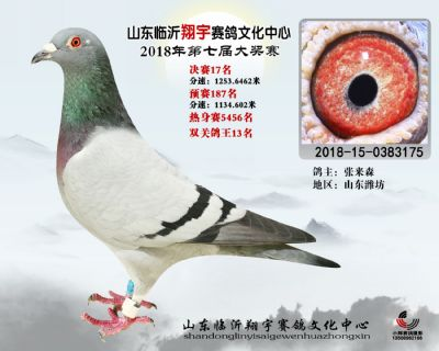 山东翔宇决赛17名