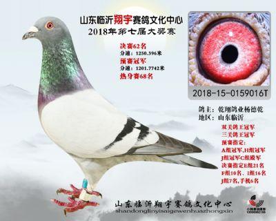 山东翔宇决赛62名