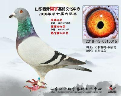 山东翔宇决赛66名