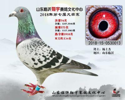 山东翔宇决赛74名
