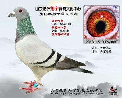 山东翔宇决赛77名