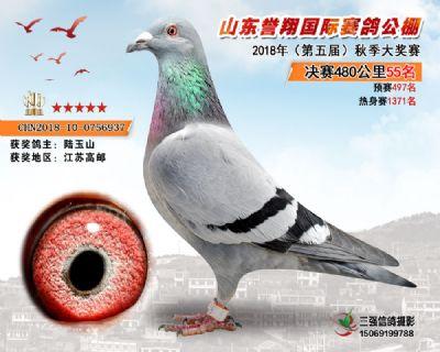 山东誉翔决赛55名