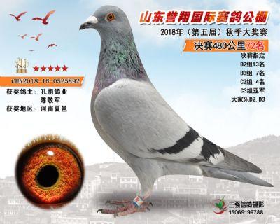 山东誉翔决赛72名
