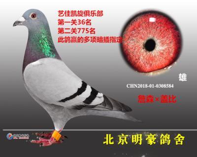 """""""三关鸽王冠军""""全平辈"""