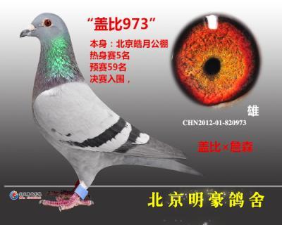 """""""盖比973""""北京皓月公棚5名"""