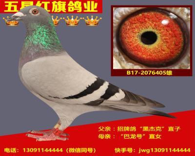 B17-2076405雄
