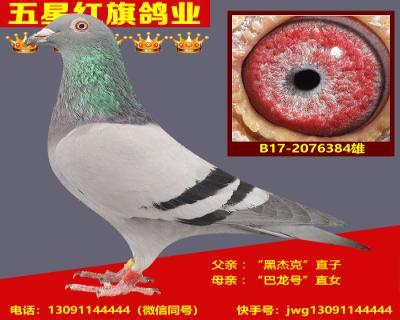 B17-2076384雄