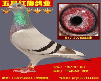 B17-2076382雌
