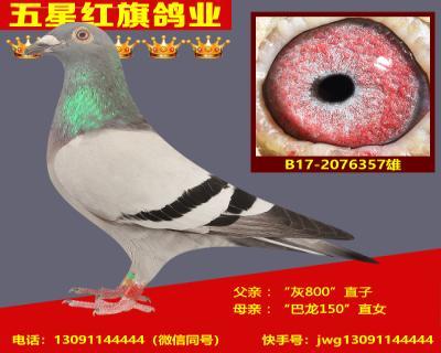 B17-2076357雄