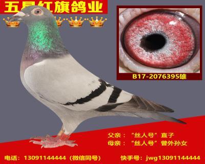 B17-2076395雄