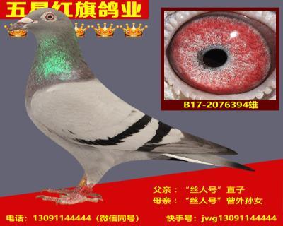 B17-2076394雄