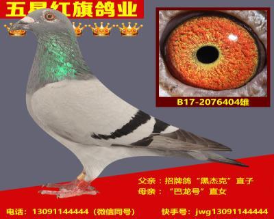B17-2076404雄