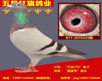 B17-2076325雄